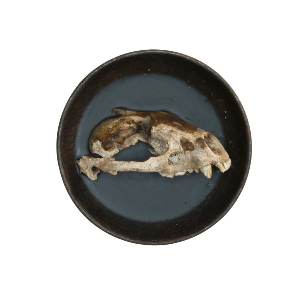 Saikuru VII, (verkocht) 2013, staal, schedel, was 14x14x6